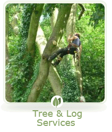 Tree Services Gallery