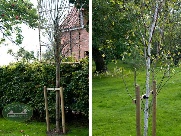 Landscaping gallery gardening landscaping tree for Tree and garden services
